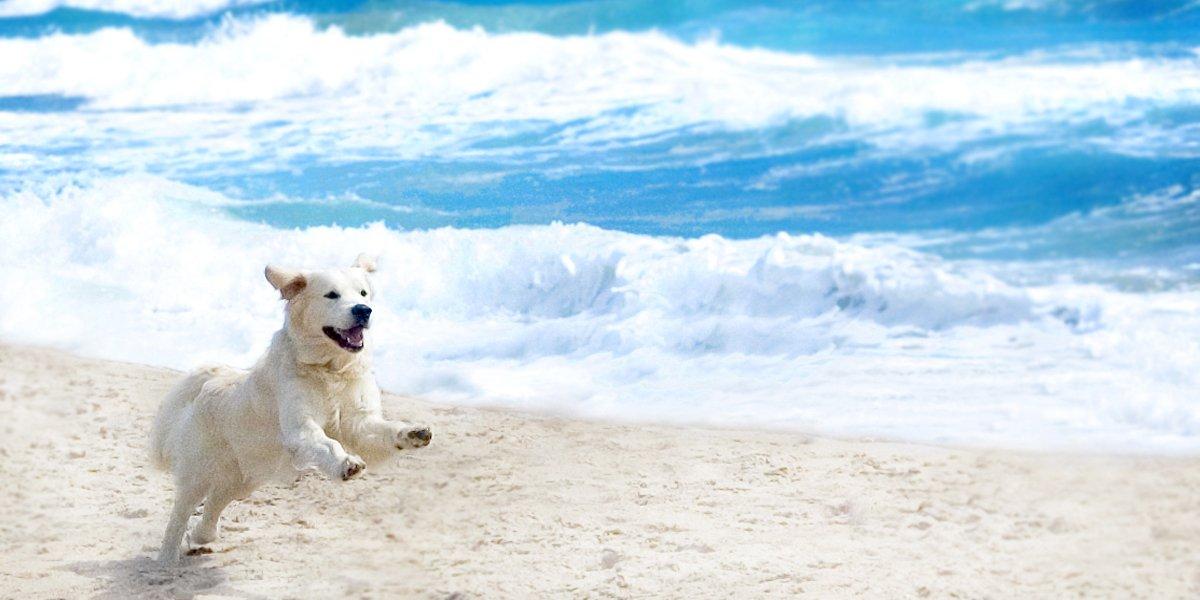 dog running on South Florida beach