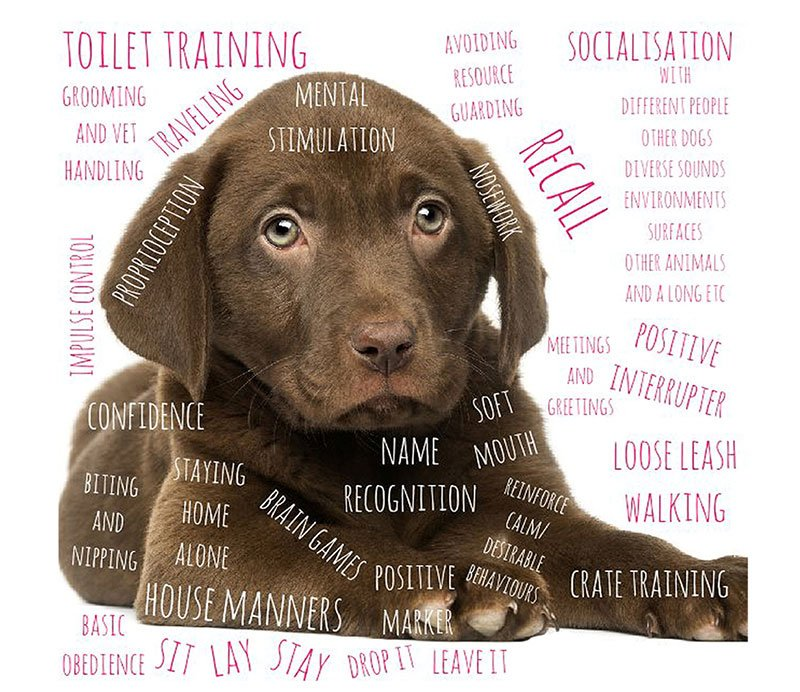education for dogs