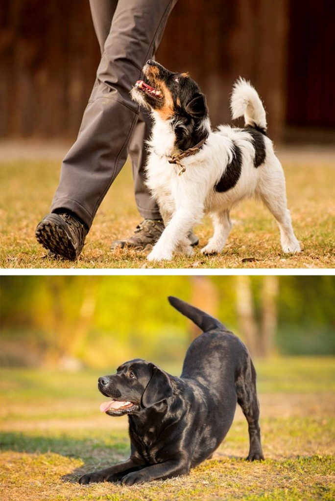 Shaping and Capturing; unlock the genius in your dog
